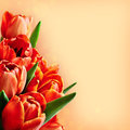 Red tulip flowers bouquet background