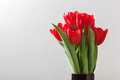 Red tulip flowers bouquet on grey background.