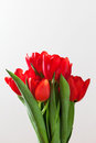 Red tulip flowers bouquet on white background.