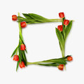 Red tulip flowers frame