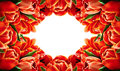 Red tulip flowers horizontal frame