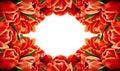 Red Tulip Flowers Horizontal F...