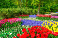 Red tulip garden in spring background or pattern field texture Royalty Free Stock Images