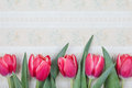 Red tulip vintage postcard Royalty Free Stock Photo