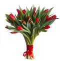 Red tulips blossoms Royalty Free Stock Images