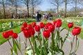 Red Tulips At Keukenhof Gardens