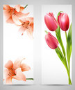 Red tulips and orange lilies Stock Photos
