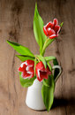 Red tulips white in white ceramic vase closeup on rustic wooden background Royalty Free Stock Photography