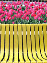Red tulips and yellow bench Royalty Free Stock Photo