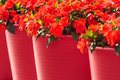 Red viola flowers in large red flower pots sunny spring view of Stock Photography