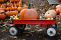 A red wagon of bright orange pumpkins are for sale at a local farm these litle wagons make it esay to buy as many of the fall fun Royalty Free Stock Images