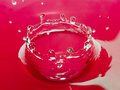 Red water bowl Royalty Free Stock Image