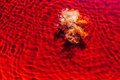 Textures red water with foam Rio Tinto, in Huelva Royalty Free Stock Photo