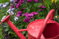 Red watering can in garden on rainy April day Royalty Free Stock Photo