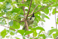 Red whiskered bulbul a bird standing on the tree Stock Images