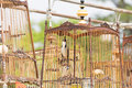 Red whiskered bulbul birdcage sound competitions in thailand Stock Photos