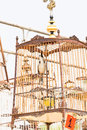 Red whiskered bulbul birdcage sound competitions in thailand Royalty Free Stock Photo