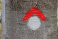 Red and whit hike path symbol painted on tree bark 2 Royalty Free Stock Photo