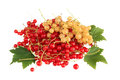 Red and white currant with leaves Stock Photos