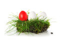 Red and white eggs in a piece of turf, easter decoration isolate Royalty Free Stock Photo
