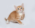 Red and white kitten playing on gray Royalty Free Stock Photo