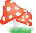 Red and white spotted toadstools illustration of typical mushroom style toad stools Stock Images