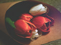 Red and White Tulips in Brown Paper Stock Photography
