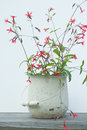 Red wild flowers in white bucket Royalty Free Stock Photo