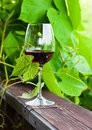 Red wine the glass with in vineyard Stock Images