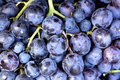 Red wine grapes background dark blue Royalty Free Stock Photo