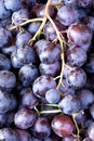 Red wine grapes background dark blue Stock Photography
