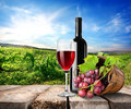 Red wine and vineyard on the table on a background of Stock Images