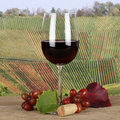 Red wine in a wine glass in autumn the vineyards with grapes Stock Images