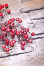 Red winter berries  with  powder snow Royalty Free Stock Photo