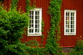 Red wooden house swedish with climbing plants and windows with white frames Royalty Free Stock Images