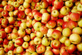 Red and yellow apples Royalty Free Stock Photography