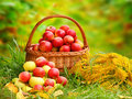 Red and yellow apples in the basket. Royalty Free Stock Image