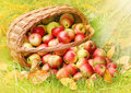 Red and yellow apples in the basket. Stock Photo