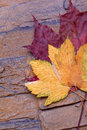 Red and yellow autumn leaves Royalty Free Stock Image