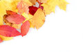 Red yellow autumn leaves frame space your text Royalty Free Stock Photography