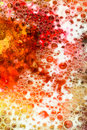 Red and yellow bubbles abstract background close up rising through colorful fluid Royalty Free Stock Images