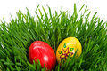 Red and yellow easter eggs Royalty Free Stock Photos