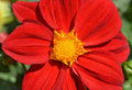 Red yellow flowe flower in garden Royalty Free Stock Photos