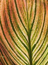 Red Yellow And Green Leaf Background Royalty Free Stock Photo