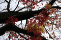 Red and yellow leaves tree Royalty Free Stock Photography