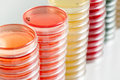 Red and yellow petri dishes stacks in microbiology lab on the bacteriology laboratory background. Royalty Free Stock Photo