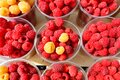 Red and yellow raspberries are collected in plastic cups Royalty Free Stock Photo