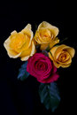 Red and yellow roses bunch on black background soft light Royalty Free Stock Image