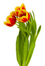 Red-yellow tulips bouquet Stock Photography