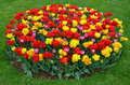 Red and yellow tulips garden round shaped in spring Stock Photography